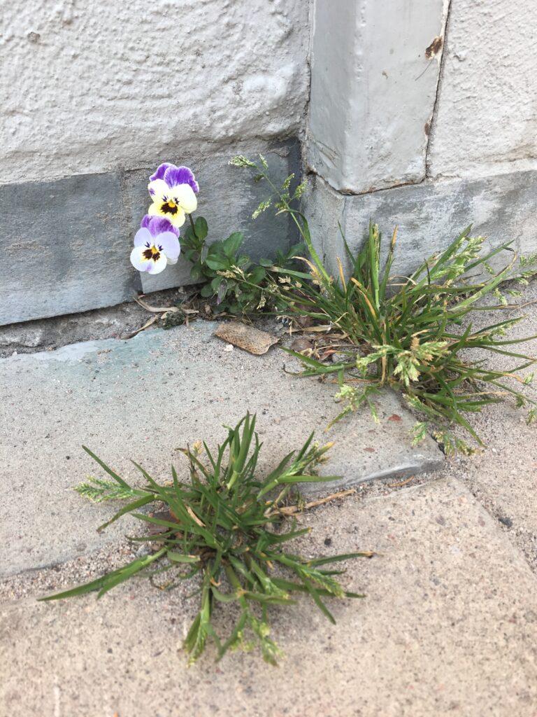 stadens flora